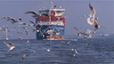 Gulls in Elbe 2